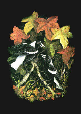 Magpies in Autumn Leaves