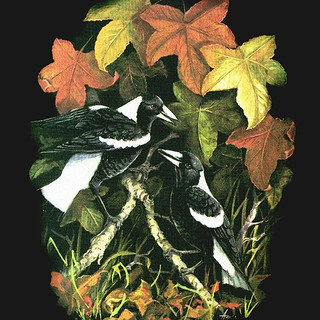 Magpies in Autumn Leaves.jpg