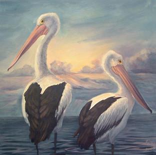 Pelican Sunrise