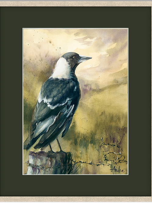 Magpie on a Country Post (Framed)
