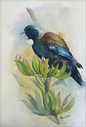 NZ Tui bird.jpg