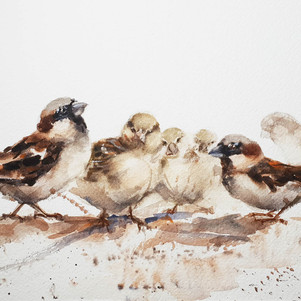 Sparrow family