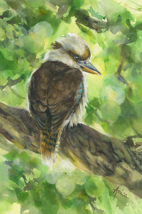 Kookaburra's Morning Watch