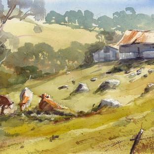 Three cows-in-Milton
