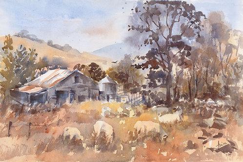 Adaminaby Plains
