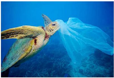 plasticwaste_kaiyou.png
