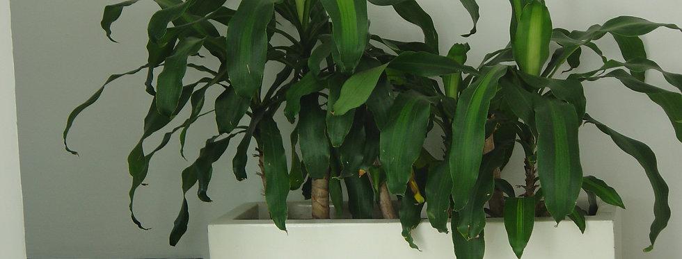Jardinera Y 65