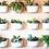 Thumbnail: Wally Eco para Muro Verde