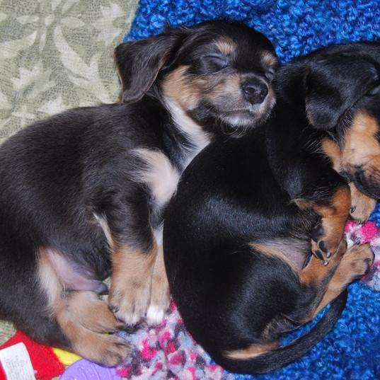 Toby & Eli
