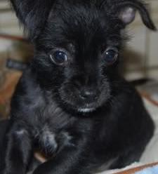 Ollie