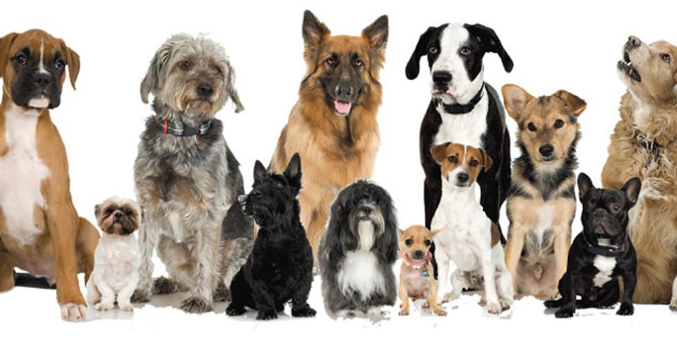 Adoptions @ Petsmart
