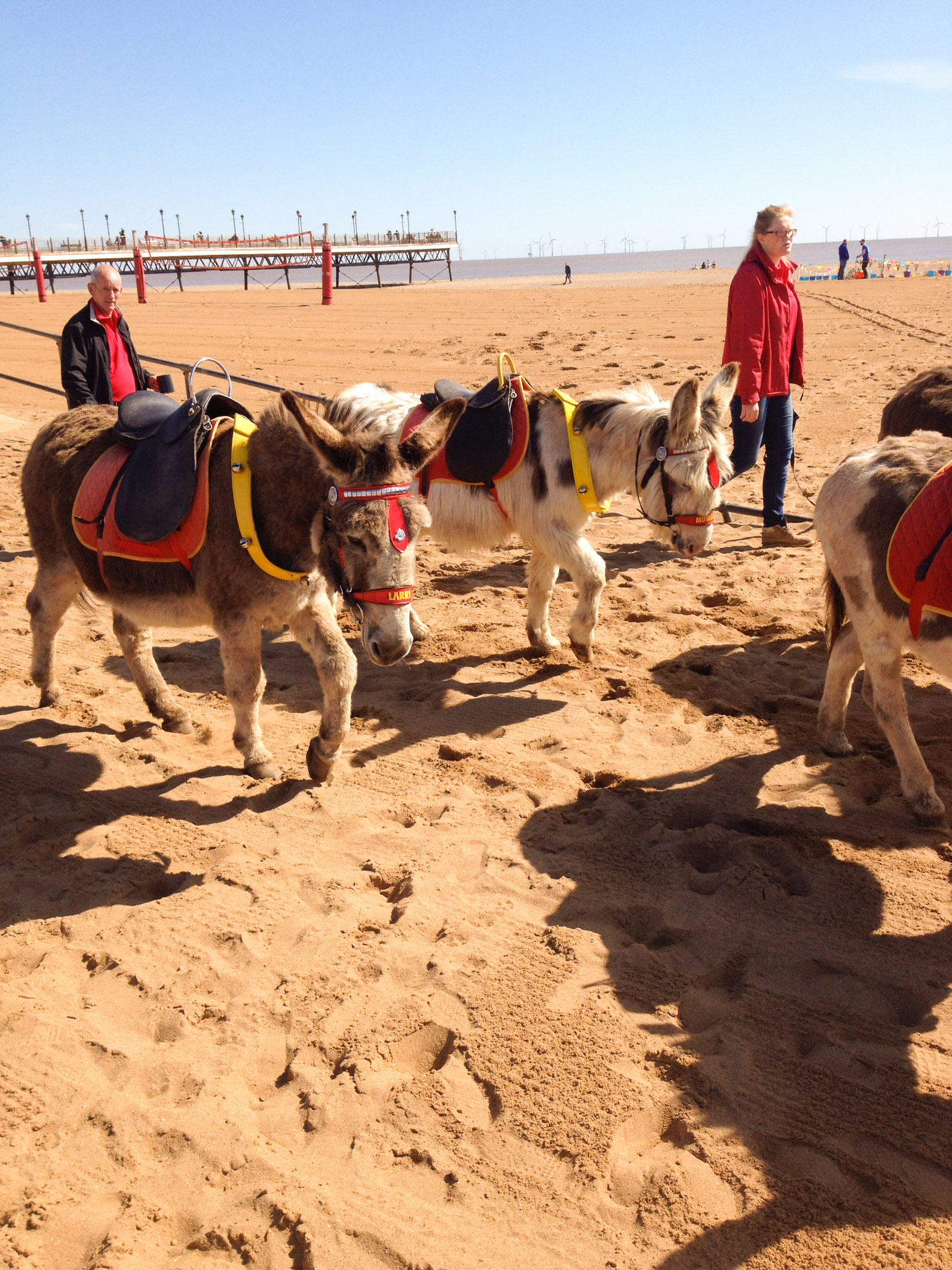 donkey_rides_beach_sskegness