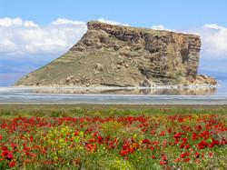 Salt Lake Flowers