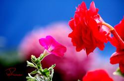 Le Parfum des Fleurs