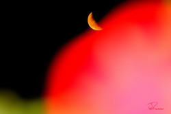 Moon and the Red