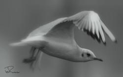 Seagull Landing Procedure