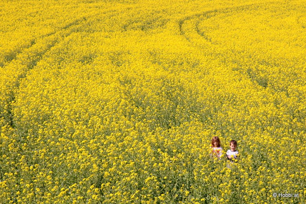 Magic Yellow Field