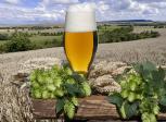 Coming Soon: Farm Breweries?