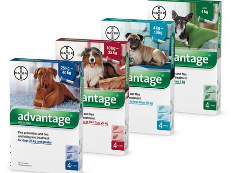 חברת Bayer שמה סוף לפרעושים וקרציות של חיות הבית!