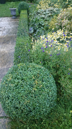 Box hedge and topiary