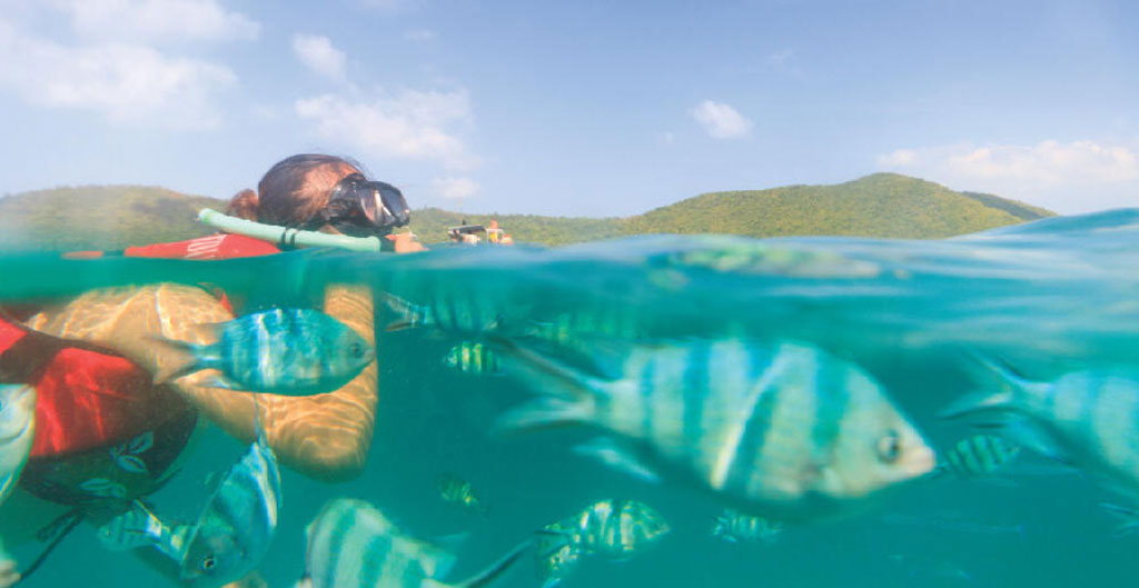 Snorkeling - Pig Island