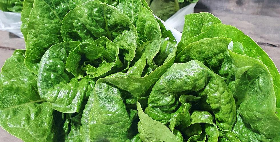 Cos Lettuce - 2 Pack