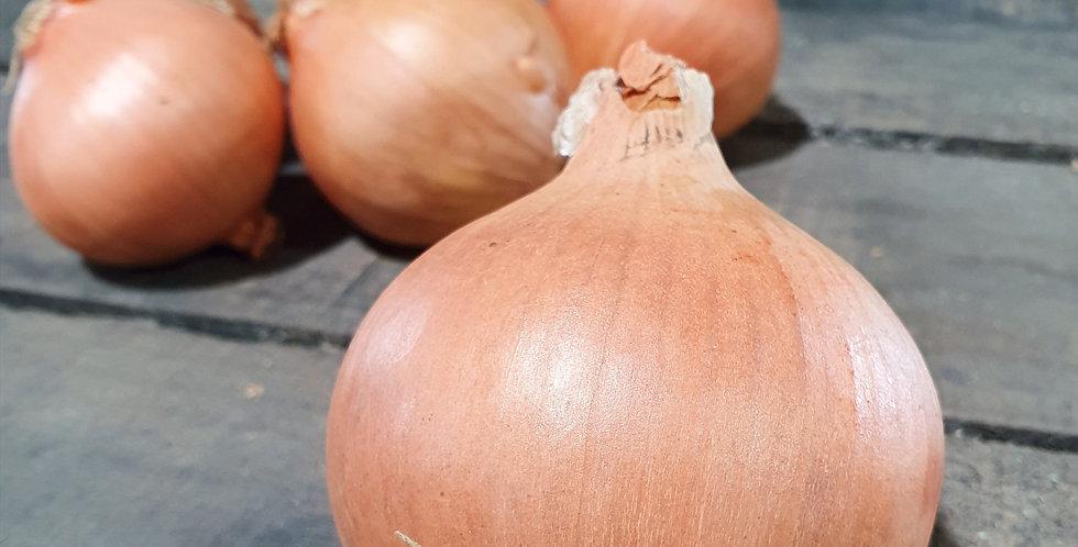 Onion - Individual