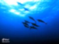 dolphin egypt.jpg