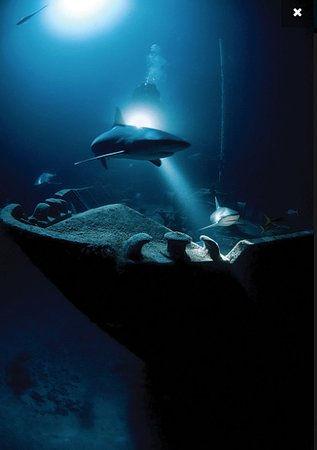 shark-night-diving.jpg