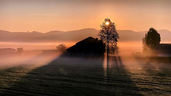 Wonderful Morning