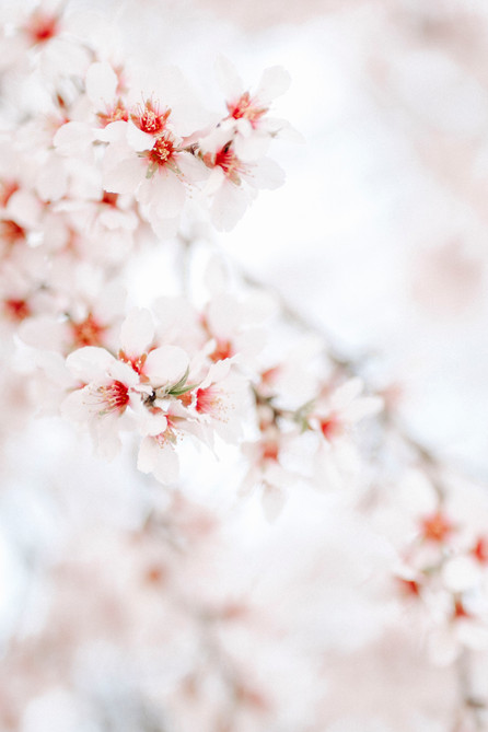 Blossoms Make My Heart Singing