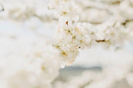 Blossoms Lightness