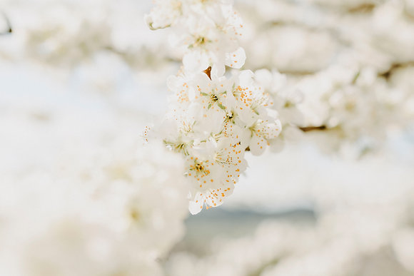 Blossoms Lightness