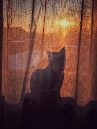Silhouette Du Chat