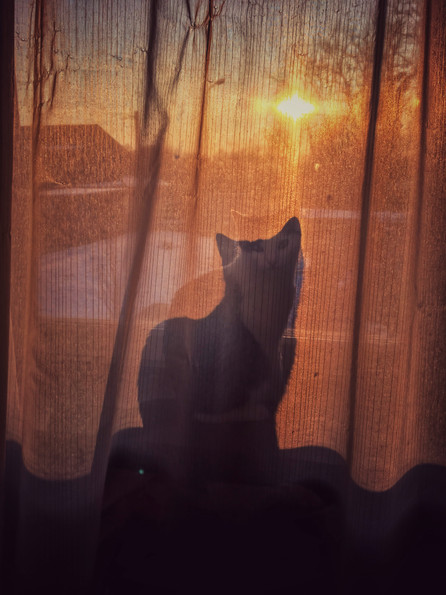 Silhouette Du Chat