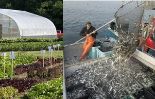 Maine Farm & Sea Cooperative wins the Maine Farm, Fish, and Food Innovation Challenge