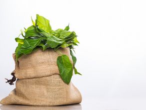 7 צמחי מרפא מובילים לתמיכה ברמות בריאות של סוכר בדם