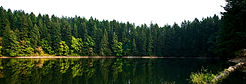 This is a photography of a tree line being reflected on a lake in the fall.