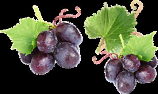 fruits behind.png