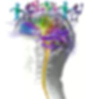 dti brain human.jpg