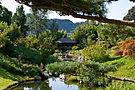 Le jardin botanique de nature Asiatique a.jpgec ses plus de 1000 variété de plante au coeur du Gard Cevenol