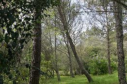 exterieure-jardin-pin.JPG
