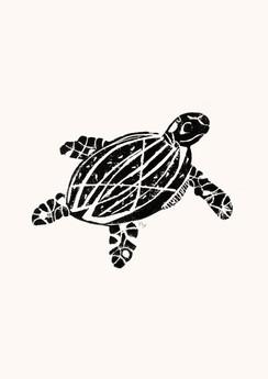 cf_turtle.jpg