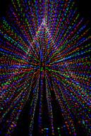 """""""Tree of Light"""""""