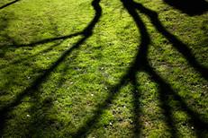 """Shadows"""