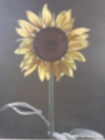 Sunflower klein.jpg