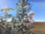 Rose garden, acrylic on canvas, 60 x 80