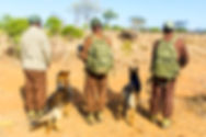 Anti-poaching dog patrols and training s