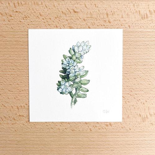 Chloe Jane Gray Succulent Study Mini Print