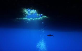 S'inspirer des traditions polynésiennes pour préserver l'océan